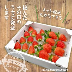 イチゴ香りのを農家発送