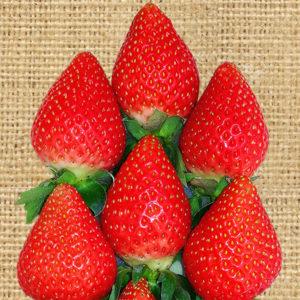かおりの 苺