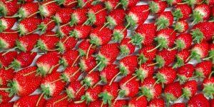 甘くて熟した苺