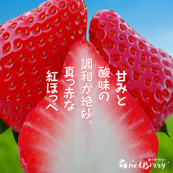 島根産の美味しい紅ほっぺ