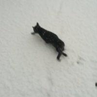 今年もこの時期に大雪