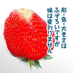 形大きさ色は不揃いですが苺の味は変わりません